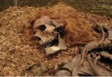 পৃথিবীর প্রাচীন রহস্য যা আজও সমাধান হয়নি
