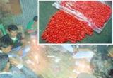 কি? এই ইয়াবা কুমিল্লার অধিকাংশ উপজেলায় এর প্রভাব দেখা যায়