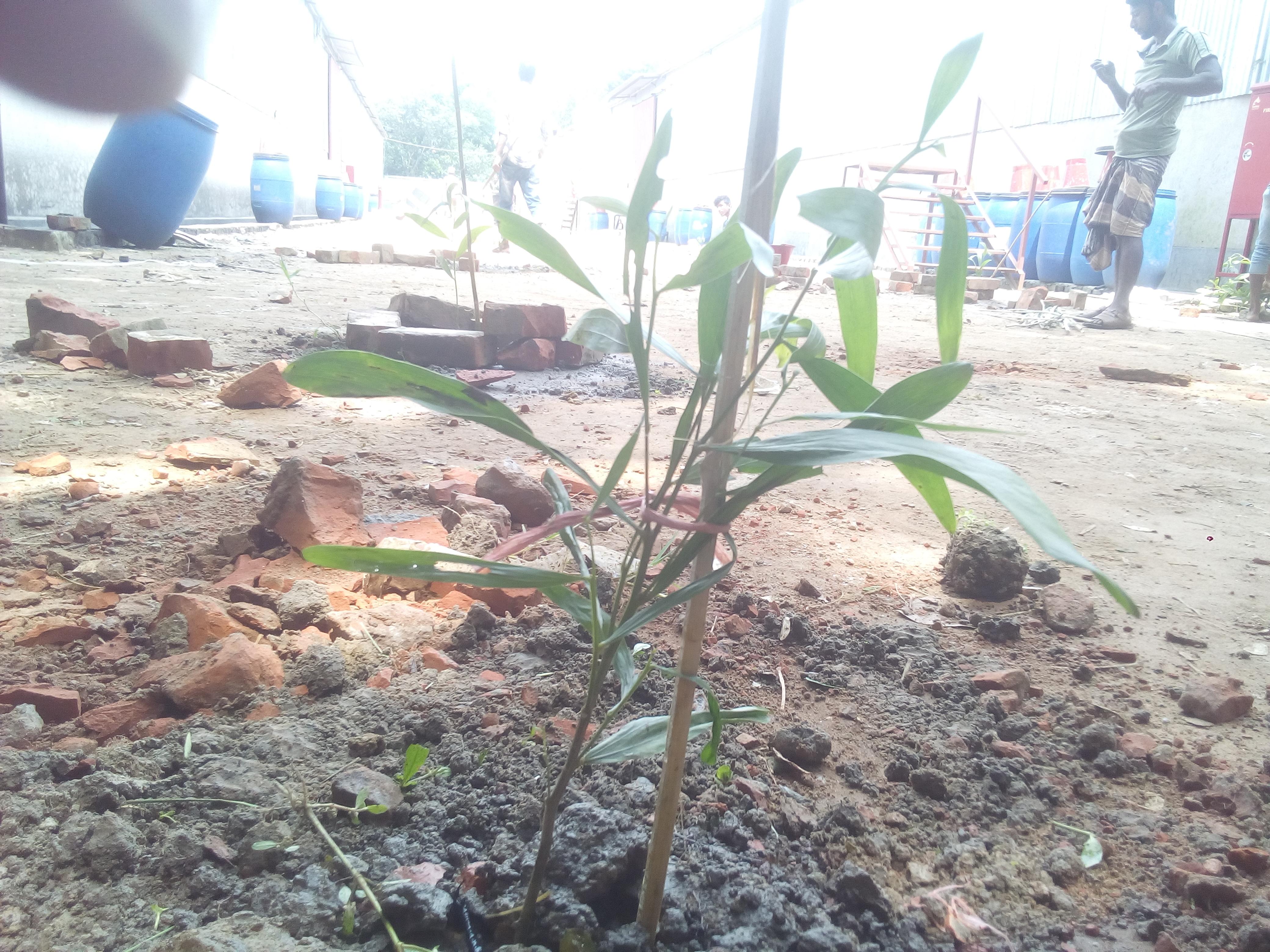 হা-মীম গ্রুপ থেকে উদ্ধার হওয়া বন বিভাগের জমিতে চারা রোপণ